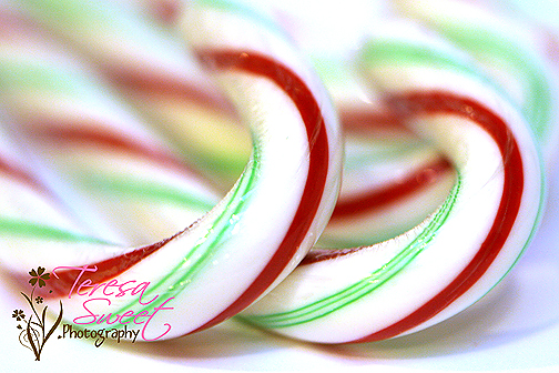 candy-canes-016-web