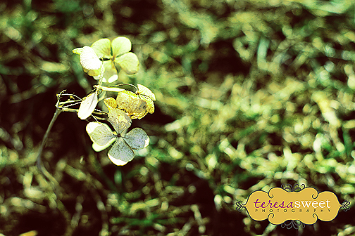 green-luck-002-web